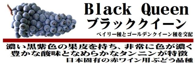 ブラッククィーン